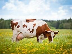Премикс П60-1 для дойных коров (1%)