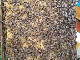 Принимаем заказы на пчелопакеты 2020, карника, бакфаст.