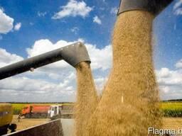 Приобретаем зерно фуражное/маслосемена рапса 2018г