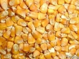 Продам дёшево кукурузу фуражную