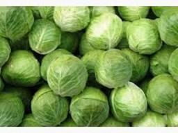 Продам капусту белокочанную для пром. переработки