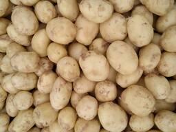 Продам. Картофель мытый Украина, урожай 2021г.