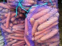 Продам морковь оптом не мытая