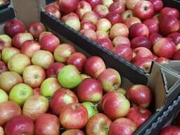 Продам оптом яблоко РБ, сорт Айдаред и Заря Алатау, калибр 5 , со склада в Минске.