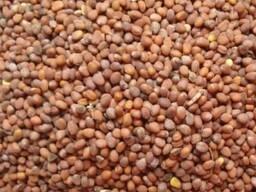 Продам семена - редька масличная. Качество. Могилев. Опт.