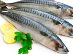 Продам свежемороженную рыбу оптом