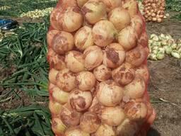 Продам свежий лук Урожай 2021г