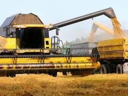 Куплю зерно фуражное, рапс, сурепицу урожая 2020!