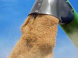 Продам зерно (пшеница озимая) пр-ва РБ 100 т.