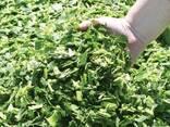 Продажа кормов (силос. сенаж) - фото 1