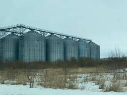 Зерно Ячмень