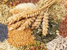 Пшеницу фуражную, ячмень, овес, рожь, кукурузу