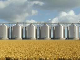 Пшеницу, ячмень, тритикале, кукурузу