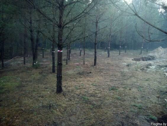 Расчистить участок от кустарников деревьев