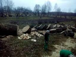 Расчистить участок от кустарников деревьев - фото 4