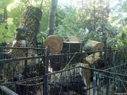 Распилить на дрова 30, 40 см. Заготовка древесины, складиров - фото 3