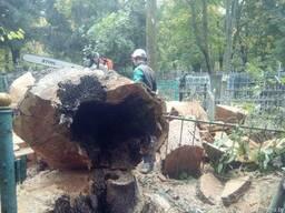 Распилить на дрова 30, 40 см. Заготовка древесины, складиров - фото 4