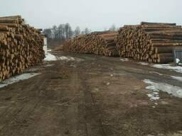 Реализуем лес свежепил и сухостой