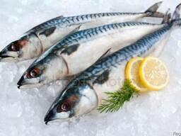 Реализуем рыбу и морепродукты со склада в Минске