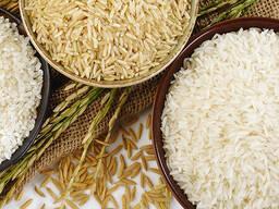 Рис - Rice