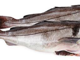 Рыба свежемороженая из России.