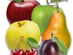 Саженцы яблони, груши . .. Проектирование садов и поддержка. .. Ищем представителя. .