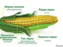 Семена гибрида кукурузы Квитневый 187МВ