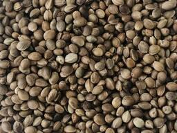 Семена конопли по беларуси анализ мочи найдут ли марихуану
