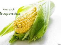 Семена кукурузы Амелиор ( Франция )