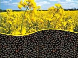 Семена Кукурузы Гороха Рапса