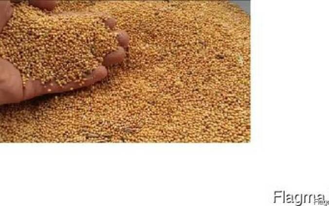 Семена просо