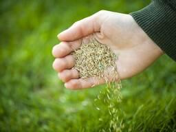 Семена трав.