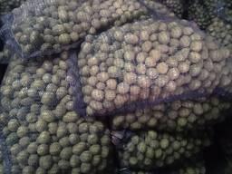Семенной картофель Гала 3-4-5 калибр 0.30 руб/килограмм
