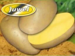 Семенной картофель Ювель (Джувел) 2 репродукция\