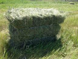 Сено многолетних трав