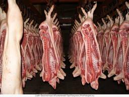 Скупаем полутуши свинины оптом и крупным оптом