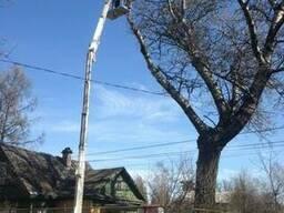 Снос аварийных деревьев
