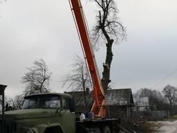 Спил деревьев в Могилёве