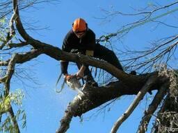 Спил и удаление деревьев