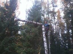 Спилить дерево по частям, с завешиванием или целиком - фото 2