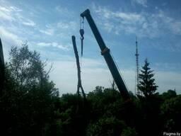 Спилить дерево по частям, с завешиванием или целиком - фото 3