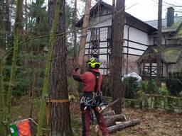 Спилить дерево по частям, с завешиванием или целиком