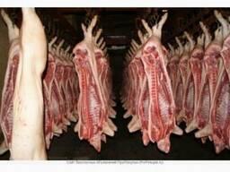 Свинина охлажденная 2-й категории, 16 т