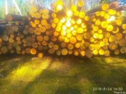 Тех сырьё лес кругляк