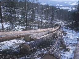 Трелевка леса Уралом