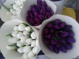 Тюльпаны и крокусы оптом к 8 марта