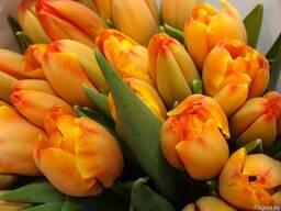 Тюльпаны к 8 Марта оптом от производителя