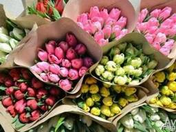 Тюльпаны оптом к 8 марта по ценам производителя. Гродно
