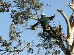 Удаление аварийных деревьев.