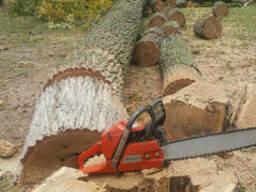 Удаление дерева - фото 1